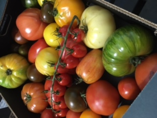 English Heritage Tomatoes