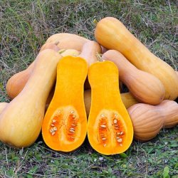 Fresh Produce: Exotic Vegetables - Butternut Squash