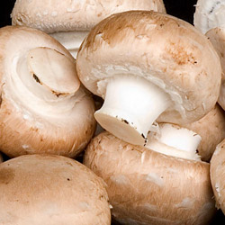 Wholesale Fresh Produce | Mushrooms