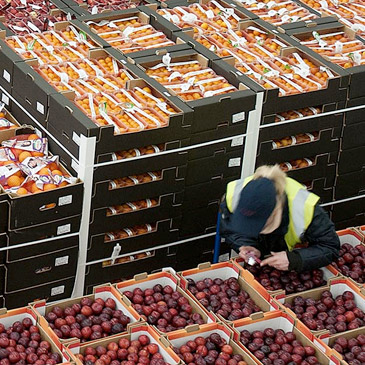 Fresh Produce Warhouse: Boxes of fresh produce stacked on a pallet being quality checked