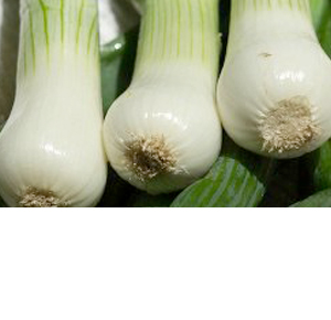 Wholesale Fresh Produce | Spring Onions